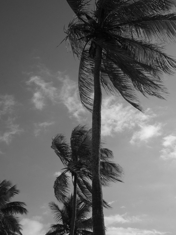 palmier rio de janeiro flamengo