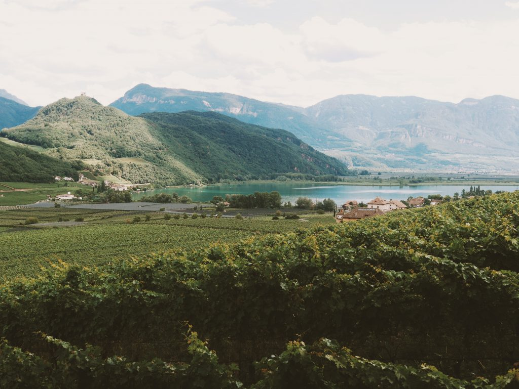 haute-adige-vignes Sud du Tyrol