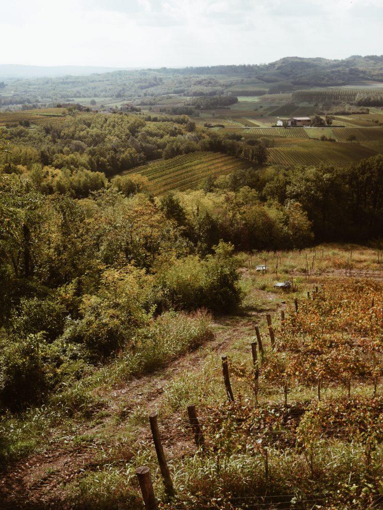 Goriska-Brda-paysage