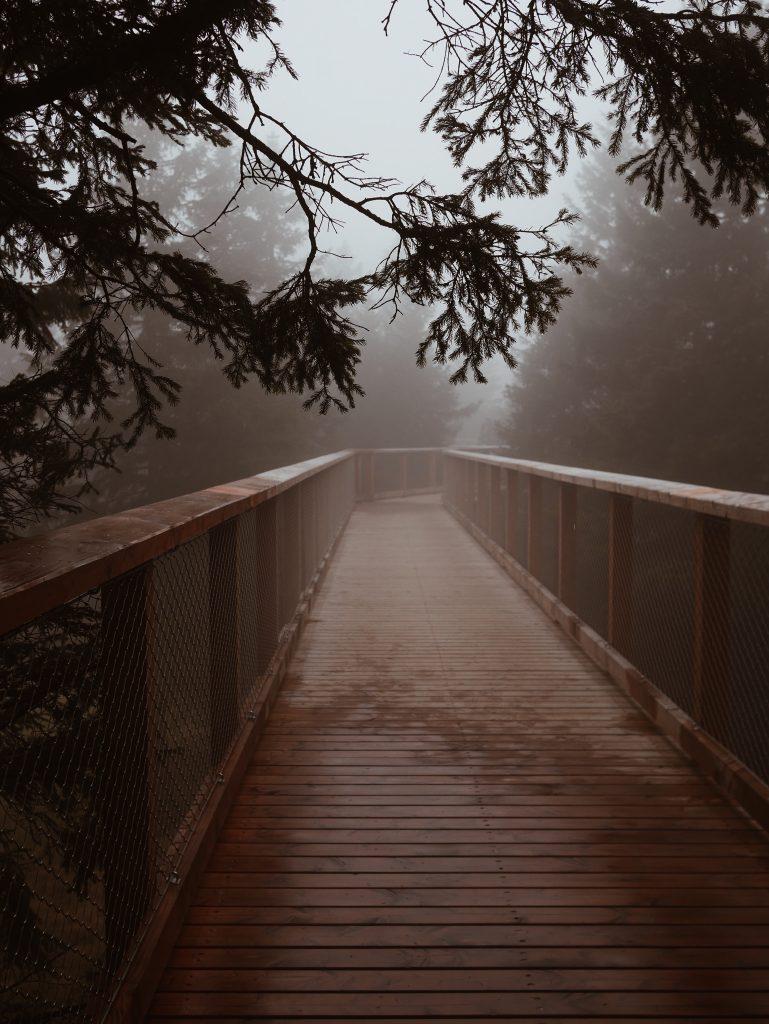 Tree-top-walk-slovenie
