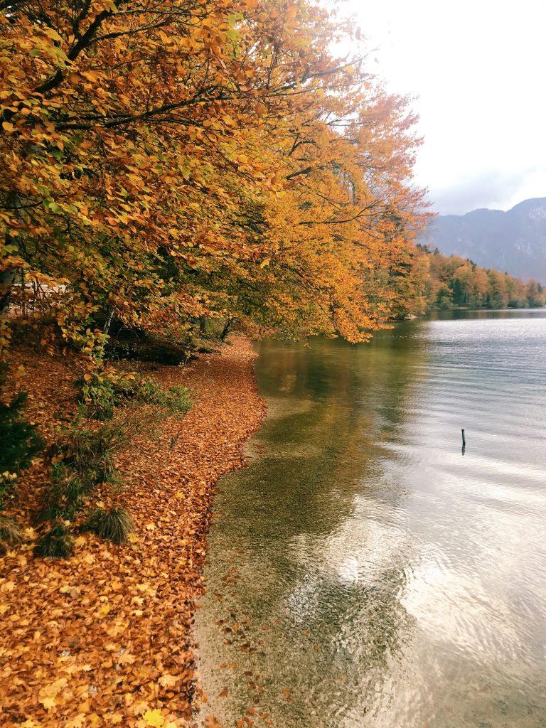 slovenie-automne-couleur